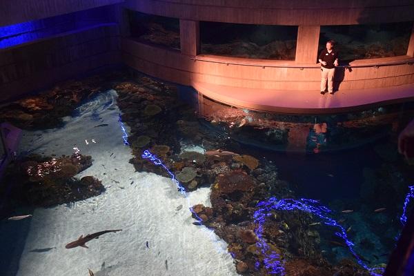 Staff member delivers presentation at the National Aquarium