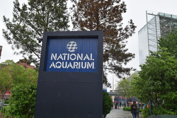Baltimore Maryland inner harbor, Baltimore aquarium tips, Baltimore weekend trips, lowkey things to do
