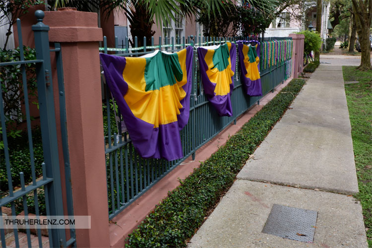 Garden District fence decorated for mardi gras