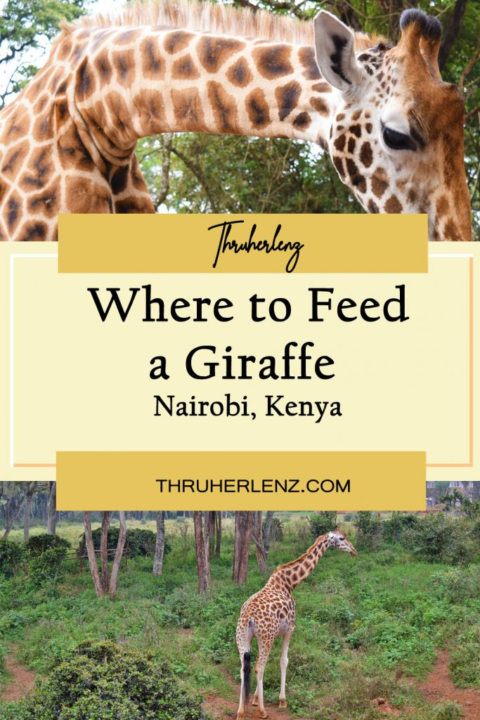Pinterest pin for Where to feed a giraffe
